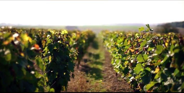 bourgogne vignoble